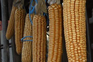 România, importator de cereale din Rep. Moldova, Serbia, Ucraina și Rusia