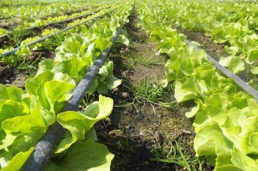 În toiul președinției UE, MADR atacă fructele și legumele din spațiul intracomunitar