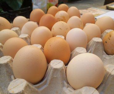 România ocupă locul 10 în Uniunea Europeană după numărul de găini ouătoare, dar cele mai multe păsări, procentul fiind de 95,5%, sunt crescute în condiții inferioare, departe de standardele europene privind bunăstarea