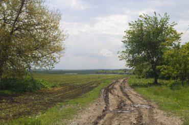 Datele prezentate de Ministerul Agriculturii contrazic propaganda despre străinii care lucrează terenuri agricole în România