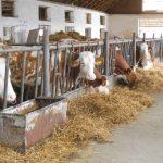Ușoară creștere a prețului mediu al laptelui de vacă în lunile iulie și august; în ce țară europeană laptele de vacă are cel mai bun preț