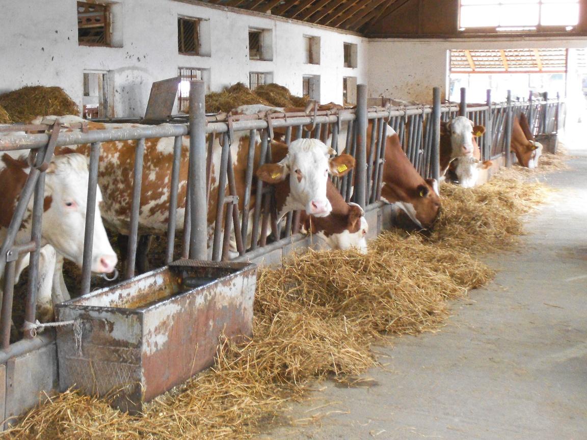 Piața laptelui: salt spectaculos al prețurilor la poarta fermei în aproape jumătate din statele Uniunii Europene; în România, creșterea este modestă, iar laptele românesc este ieftin la producător