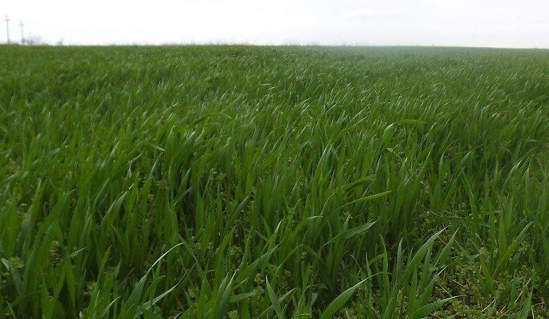 De ce fermierii români primesc una dintre cele mai mici subvenții agricole; Demontarea unei teze de propagandă anti-europeană