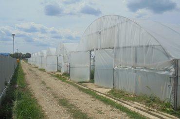 Un fost ofițer de rang înalt, acum patron de firmă de protecție și pază, a înființat cea mai mare fermă legumicolă din județul Dâmbovița și vinde legume în hypermarketuri