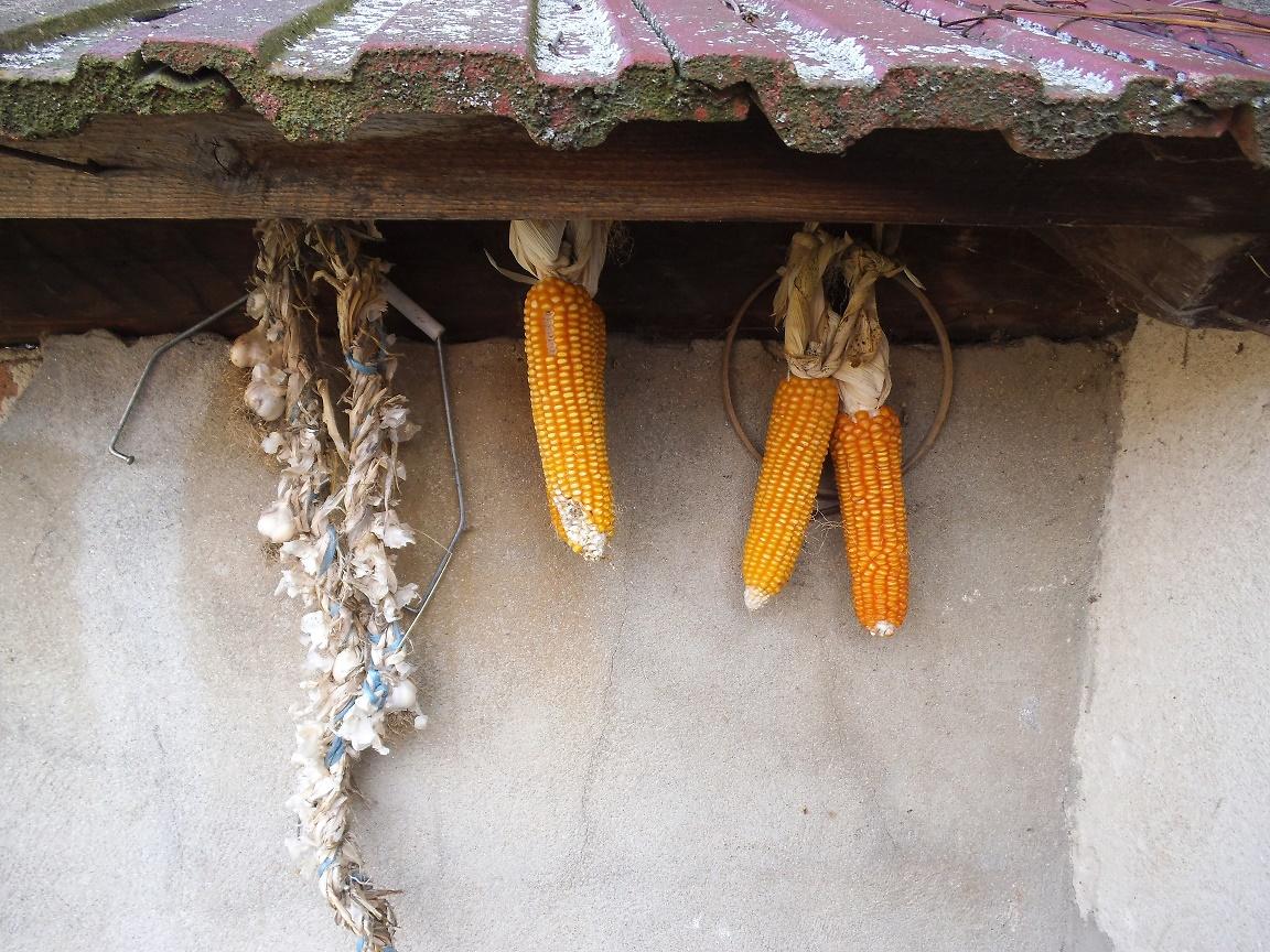 """Comisia Europeană către autoritățile de la București: """"ajutați fermele mici cu potențial mare de dezvoltare"""""""