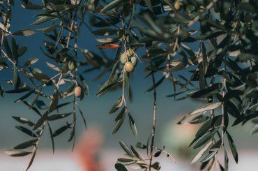 Fermierii italieni dau convins autoritățile să le înființeze bio-districte, unde cea mai mare parte a producției bio este vândută direct turiștilor; pe când și în România?