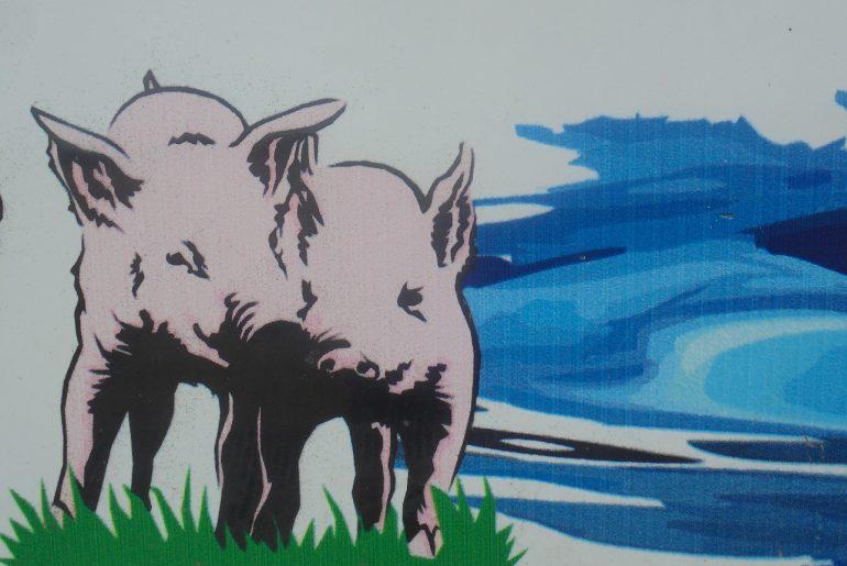 INS: efectivele de porci au scăzut în România cu 403.011 de capete; PPA a făcut ravagii în sud-estul țării