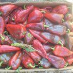"""Interes major al legumicultorilor pentru noul ajutor de minimis pentru legume în spații protejate, care înlocuiește programul """"Tomate românești""""; înscrierile s-au încheiat, urmează verificarea dosarelor"""