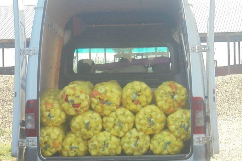Lantulalimentar.ro în județul Ialomița: Tinerii fermieri din comuna Maia au abandonat legumicultura și s-au angajat la București