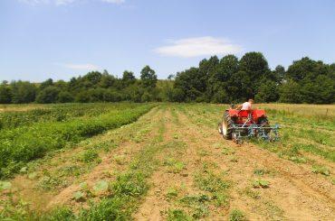 Fermierii din Transilvania, mult mai receptivi la mișcarea WWOOF decât fermierii din celelalte regiuni
