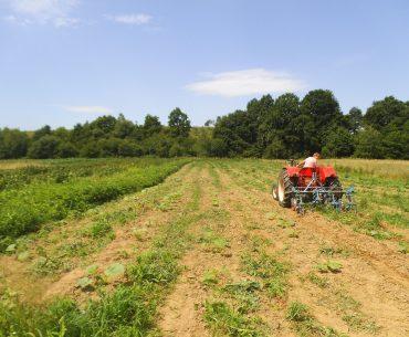 Statistici alarmante: sute de mii de tineri români au abandonat agricultura; fenomenul este prezent și în alte state europene