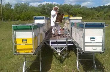 Apicultorii din Caraș-Severin au solicitat Ministerului Agriculturii sprijin financiar pentru achiziționarea unor linii de îmbuteliere a mierii, dar ministerul nu l-a acordat