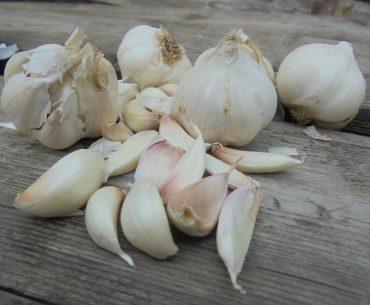Câți bani au încasat cultivatorii de usturoi din Botoșani, din bugetul național, pentru producția din 2019
