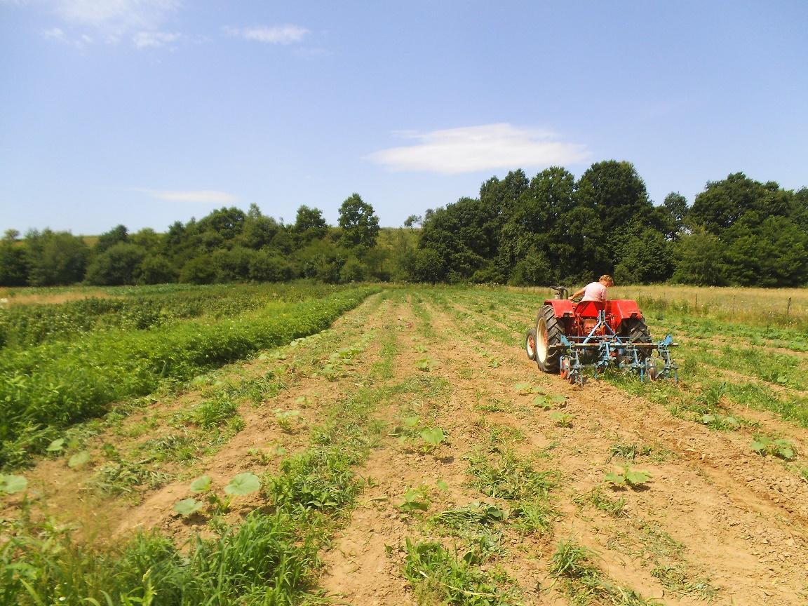 Agricultura ecologică: în 2019, operatori mai mulți, suprafață certificată mai mare; a scăzut suprafața cu legume cultivate ecologic