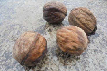 Nucile și semințele, pe primul loc în topul mărfurilor agro-alimentare raportate în Sistemul Rapid de Alertă pentru Alimente și Furaje ( RASFF )