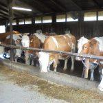 Obiectiv al noii președinții germane a Consiliului European: un logo comunitar pentru produsele obținute de la animale crescute în condiții de bunăstare