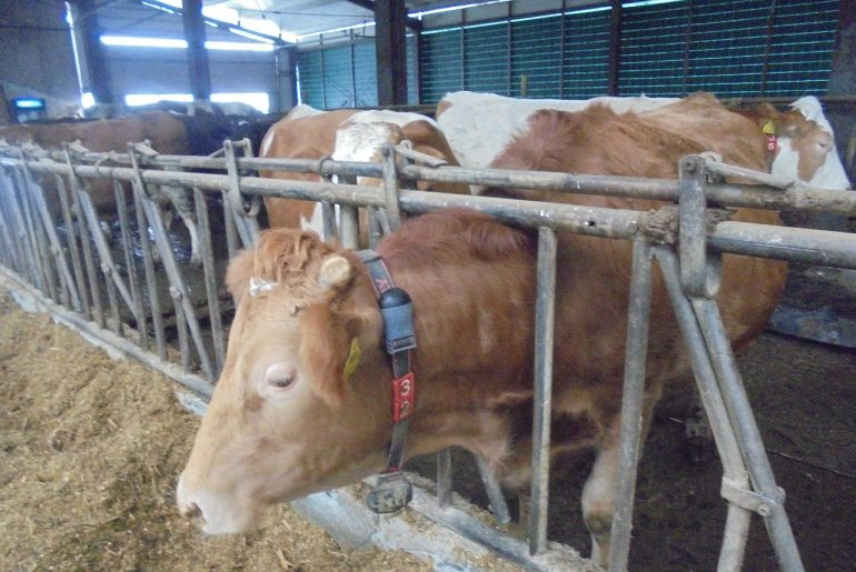 """Tânăr fermier român: """"Să se ocupe alții de procesarea laptelui și de comercializarea brânzei. Eu vreau numai să primesc prețul corect pentru laptele plecat din fermă"""""""