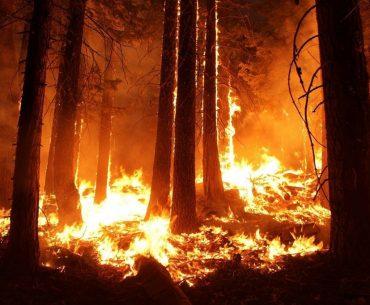Producția de miere de Manuka din Australia, compromisă de incendiile masive de vegetație; apicultorii tineri, șocați de atmosfera apocaliptică din păduri, primesc consiliere psihologică