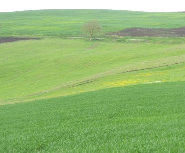 Ordonanța nr. 8 interzice exportul de cereale în afara Uniunii Europene, după ce mari cantități au fost deja vândute; cu toate acestea, fiecare tonă de cereale reținută în țară este importantă pentru securitatea alimentară
