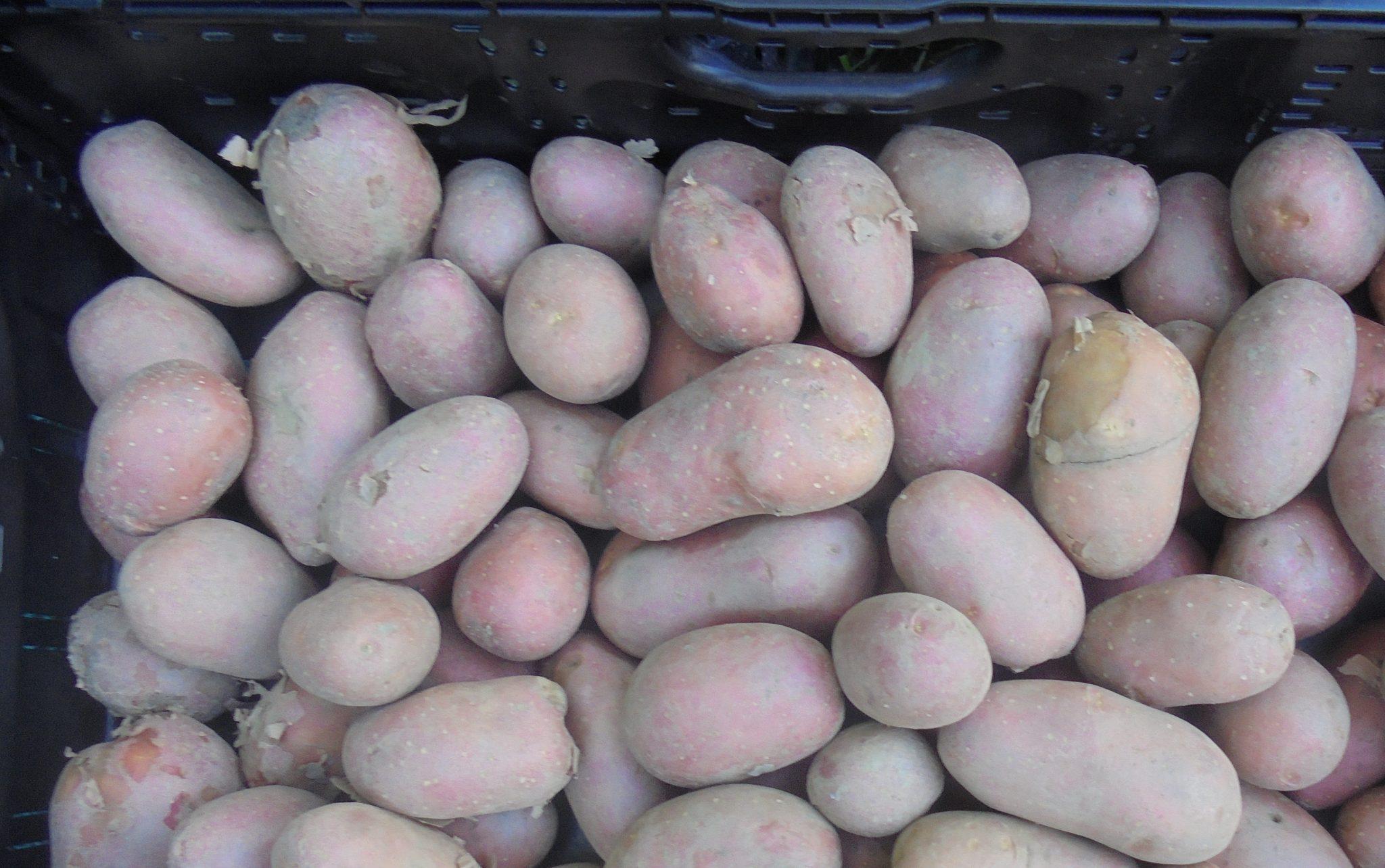 Măsura 21: cultivatorii de legume în câmp, sere și solarii, pomicultorii și cultivatorii de cartofi pot depune până la 23 octombrie actele necesare pentru încasarea sprijinului financiar; care sunt documentele necesare și condițiile specifice