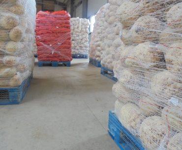 Trei tineri din Galați, care în copilărie au muncit cot la cot cu părinții, la I.A.S., au atras fonduri europene și acum vând hypermarketurilor mii de tone de legume