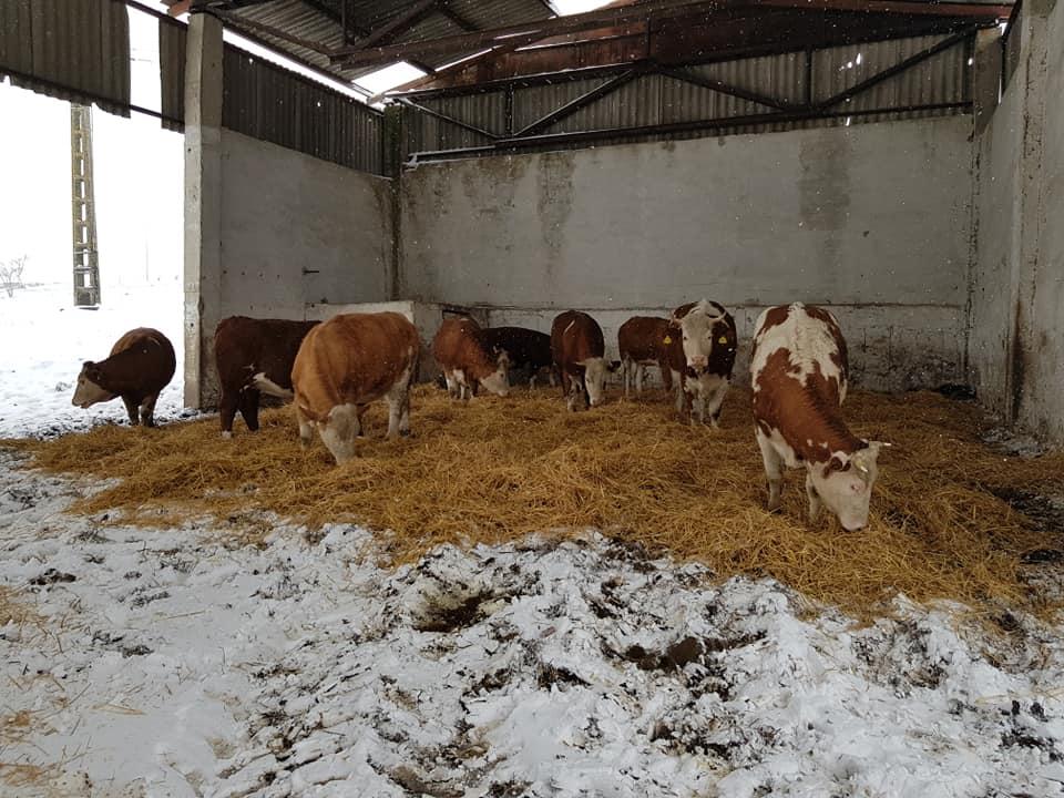 Agricultura românească e puternică! Familia Ionuț din județul Cluj vinde zilnic lapte și brânzeturi proaspete la cele trei magazine închiriate în oraș