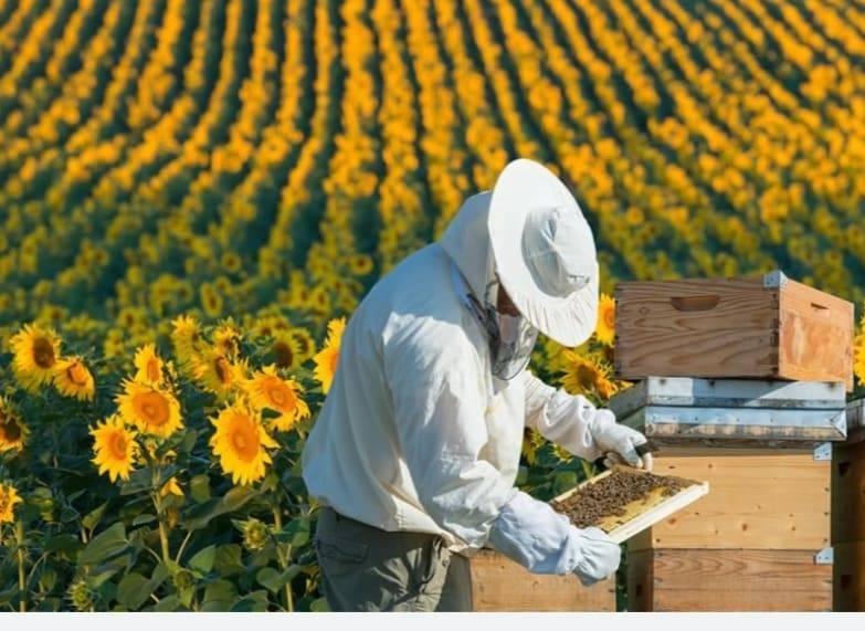 Stupul cu senzori, o soluție propusă apicultorilor pentru a-și monitoriza mai eficient familiile de albine