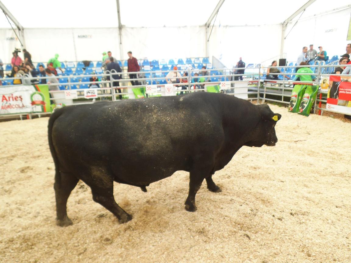 Exporturile de carne de vită din Argentina în Uniunea Europeană, afectate grav de valul 2 al pandemiei Covid -19