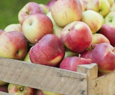 Producția de mere românești, fluctuații mari în ultimii ani