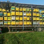 Apicultorul argeșean Aurelian Chilom vinde miere la tonomat, în centrul Bucureștiului; cea mai mare parte a producției de miere ajunge, însă, tot la export