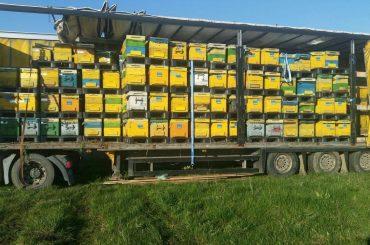 Apicultorii, crescătorii de bovine, de păsări și suine au la dispoziție 20 de zile lucrătoare pentru a depune la Direcțiile agricole, respectiv APIA documentația necesară încasării ajutorului financiar de la bugetul de stat