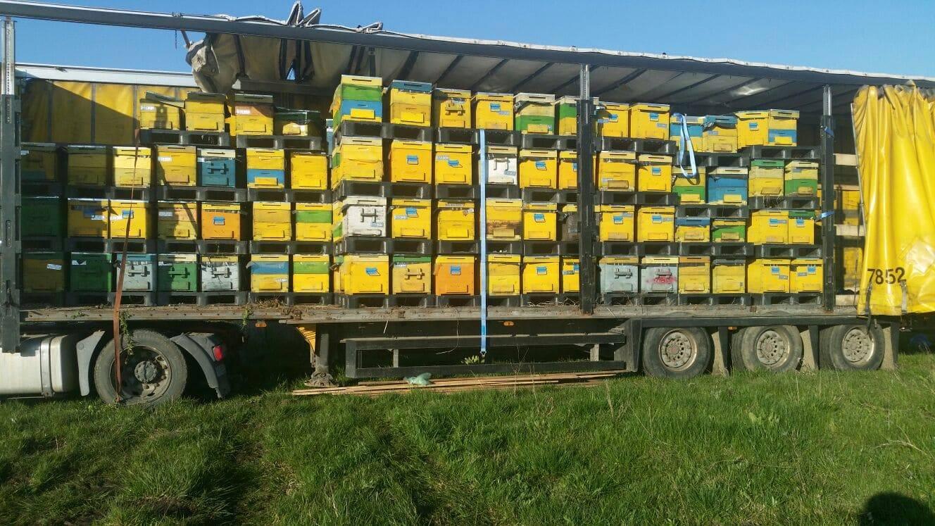 Planul Național Apicol: 6.150 apicultori declarați eligibili și 10 forme asociative legal constituite au încasat banii pentru anul 2020