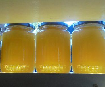 Semnal de alarmă al apicultorilor italieni: mierea ieftină din China le pune în pericol activitatea; România și-a dublat importurile din țări terțe