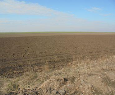 Câți tineri fermieri ar putea concesiona terenuri de la stat; pe siteul Agenției Domeniilor Statului nu există informații complete despre terenurile disponibile la nivel național pentru concesionare