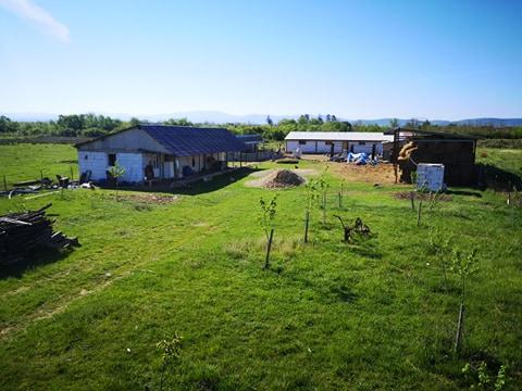 Zbaterile micului fermier: un fost mecanic la CFR Timișoara a înființat o fermă de creștere a animalelor, dar pandemia Covid- 19 i-a dat multe planuri peste cap