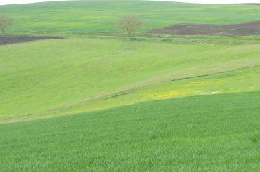 De ce primesc fermierii români una dintre cele mai mici subvenții din Uniunea Europeană; aritmetica banilor europeni este făcută la București