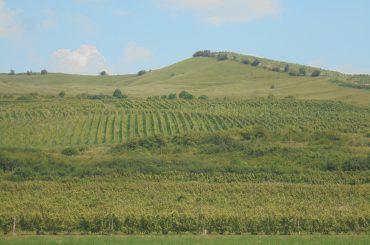 Doi frați și fiul unuia dintre ei au pus pe picioare, în Ciumbrud, județul Alba, una dintre cele mai active afaceri viti-vinicole din Transilvania