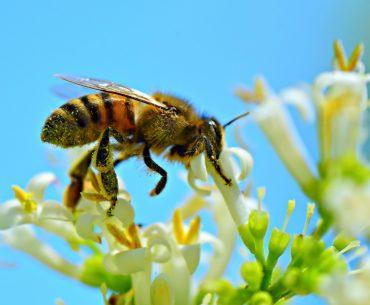 Reguli europene pentru practicarea apiculturii în sistem ecologic; la sfârșitul sezonului de producție, stupii trebuie să rămână cu rezerve suficiente de miere și polen pentru ca albinele să supraviețuiască peste iarnă