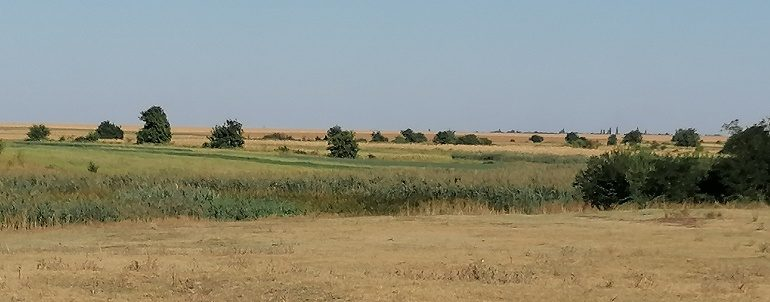 Bani pentru fermieri la sfârșitul anului: plata regulară, ajutorul anti-Covid ( M 21 ), restul de 18% pentru secetă, SCZ zootehnie