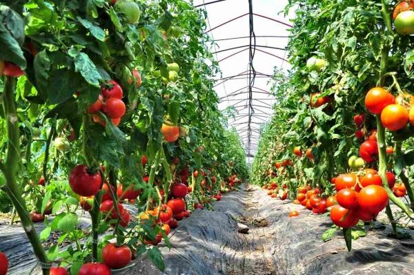 """Ministrul agriculturii, Adrian Oros, afirmă că """"avem o slabă promovare a produselor româneşti""""; milioane de euro au fost însă alocate din bugetul european în acest scop"""