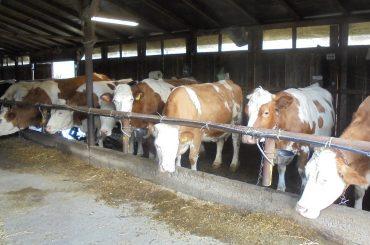 Comisia Europeană a aprobat noi aditivi pentru hrana animalelor