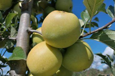 Semnal de alarmă: 30% din copiii din România nu consumă fructe în fiecare zi, iar doi din trei mănâncă dulciuri zilnic