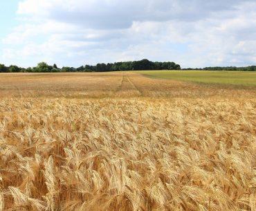 Sumă uriașă din bugetul european oferită fermierilor români de Ministerul Agriculturii pentru înființarea de spații de depozitare și linii de prelucrare a materiilor prime