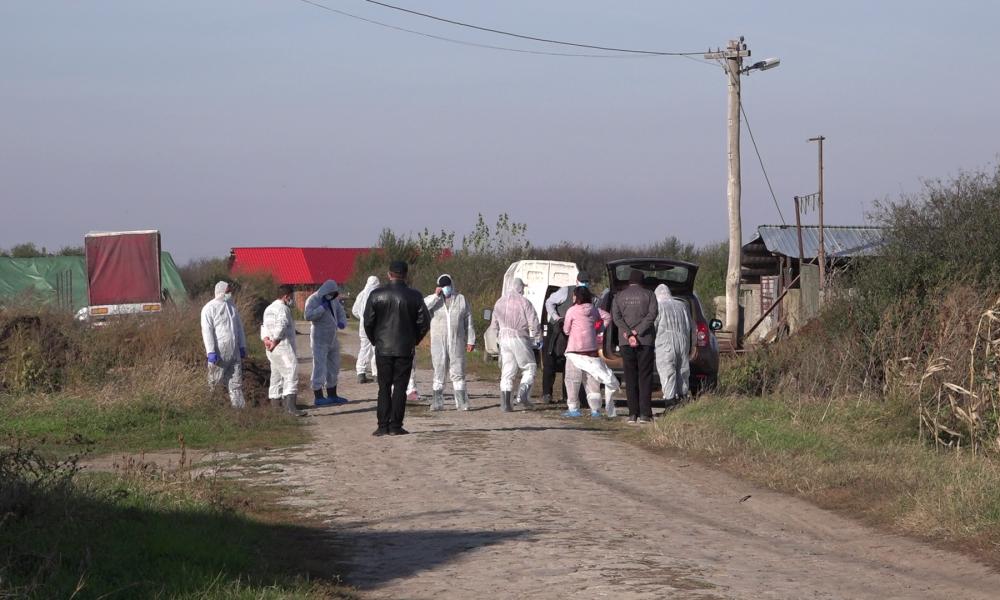 Crescătorie de porci clandestină, descoperită în județul Arad ca urmare a răspândirii pestei porcine africane; ce acuzații fac veterinarii arădeni