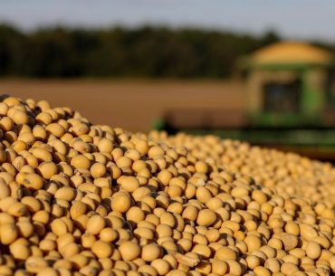 Comisia Europeană recomandă României să investească în culturile proteice ( soia, mazăre, fasole, năut ); țara noastră ocupă deja locul trei în U.E. în ce privește suprafața cultivată cu soia