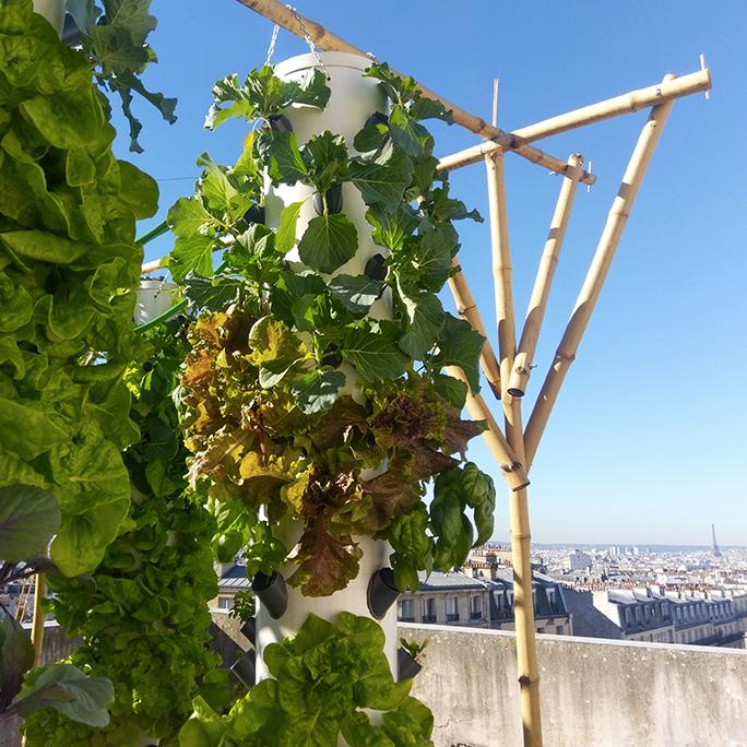 Locuitorii din marile orașe ale lumii s-au apucat de agricultură; Camera Națională Agricolă din Franța îi sprijină pe fermierii din Paris și alte orașe din țară