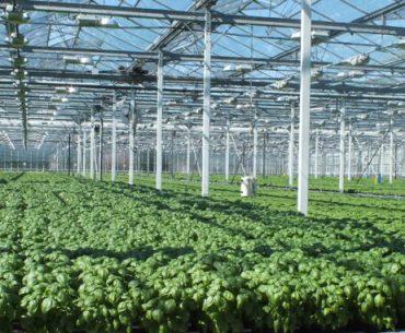 """""""Agricultura în ghiveci"""", o afacere de familie profitabilă în Germania; asocierea micilor fermieri este cheia succesului lor"""