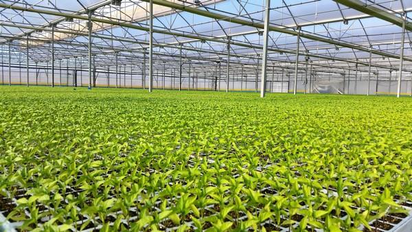 Creștere spectaculoasă în timpul pandemiei a vânzărilor de produse bio pe piața spaniolă; în România, sectorul rămâne încă slab dezvoltat