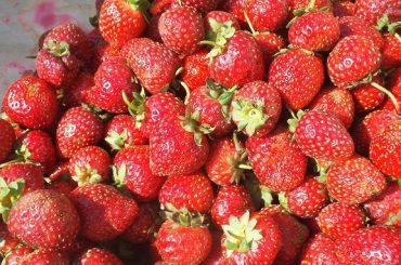 Piața căpșunelor: Spania, cel mai mare producător european, greu încercată anul acesta din cauza condițiilor meteorologice; din cauza panemiei, acces dificil pe piața germană