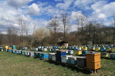 """Apicultor din județul Vâlcea: """"înainte extrăgeam 50 de kg de miere dintr-un stup, acum abia scot pe jumătate"""""""